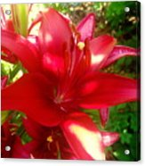 Rose Pink Lily Acrylic Print
