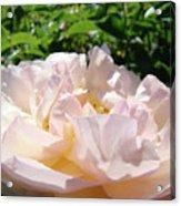 Rose Pink Sunlit Rose Flower Art Prints Baslee Troutman Acrylic Print