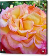 Rose Pink Yellow Rose Flower 2 Rose Garden Giclee Prints Baslee Troutman Acrylic Print