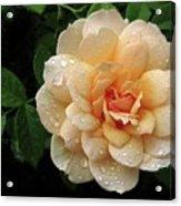 Rose Rain Acrylic Print