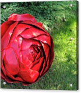 Rose Sculpture Acrylic Print