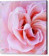 Rose Spiral Art Pink Roses Floral Baslee Troutman Acrylic Print