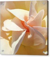 Rose Spiral Flower Art Prints Peach Rose Floral Baslee Troutman Acrylic Print
