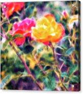 Rose Sweet Acrylic Print