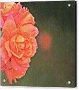 Rose Symphony Acrylic Print