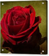 Rose Tapestry Acrylic Print
