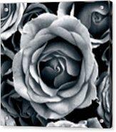 Rose Tones Acrylic Print