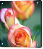 Rose Trio Acrylic Print