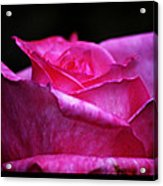 Rose Tryptich Acrylic Print