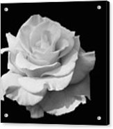 Rose Unfurled In Black And White Acrylic Print