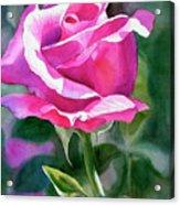 Rose Violet Bud Acrylic Print