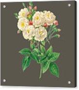 Rose126 Acrylic Print