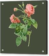 Rose128 Acrylic Print