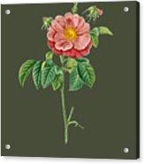 Rose133 Acrylic Print