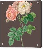 Rose155 Acrylic Print