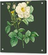 Rose81 Acrylic Print