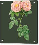 Rose82 Acrylic Print
