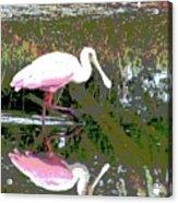 Roseate Spoonbill II Acrylic Print