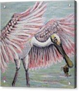Roseate Spoonbill On The Foggy Laguna Madre Acrylic Print