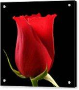 Rosebud Acrylic Print