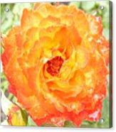 Rosegarden No. 22 Acrylic Print