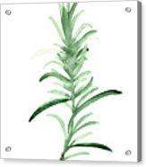 Rosemary Green Watercolor Foodart Acrylic Print