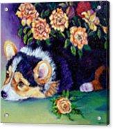 Roses - Pembroke Welsh Corgi Acrylic Print