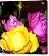 Roses 4 Acrylic Print