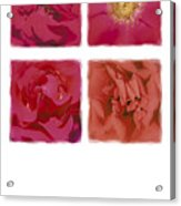 Roses Are Red .... Acrylic Print