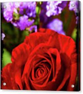 Roses Are Red II Acrylic Print