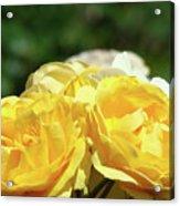 Roses Art Prints Canvas Sunlit Yellow Rose Flowers Baslee Troutman Acrylic Print