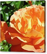 Roses Art Prints Orange Rose Flower 11 Giclee Prints Baslee Troutman Acrylic Print