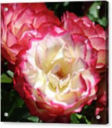Roses Art Prints Pink White Rose Flowers Gifts Baslee Troutman Acrylic Print
