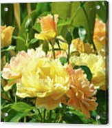 Roses Art Prints Rose Garden Flowers Giclee Prints Baslee Troutman Acrylic Print