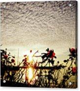 Roses At Sea Acrylic Print