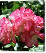 Roses Bouquet Pink White Rose Flowers 2 Rose Garden Baslee Troutman Acrylic Print