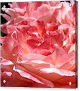 Roses Cinnamon Pink Rose Flowers 3 Rose Garden Art Baslee Troutman Acrylic Print