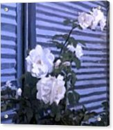 Roses De Lignes Bleues Acrylic Print