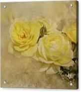 Roses Delight Acrylic Print