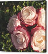 Roses In A Vase,on The Grass Acrylic Print