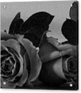Roses In Bed Acrylic Print