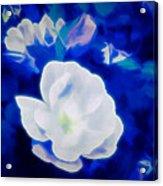 Roses In Bllue Acrylic Print