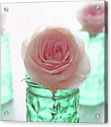 Roses In Green Jars Acrylic Print