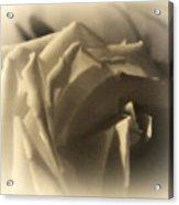 Roses In Moonlight 3 Acrylic Print