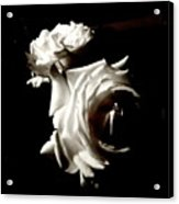 Roses In Moonlight 8 Acrylic Print