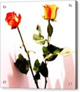 Roses In The Light Acrylic Print