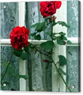 Roses In The Window Acrylic Print