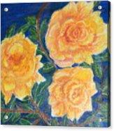 Roses In Yellow Acrylic Print
