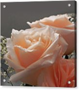 Roses Light Acrylic Print