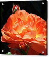 Roses Orange Rose Flowers Rose Garden Art Baslee Troutman Acrylic Print